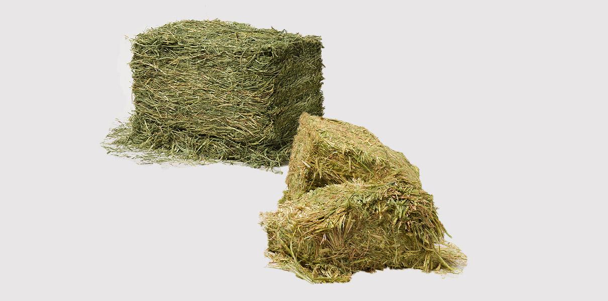 業務用牧草